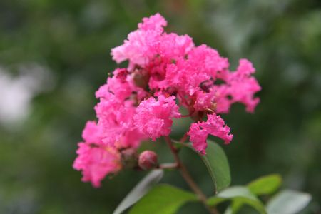 dedo me�ique: flor rosa