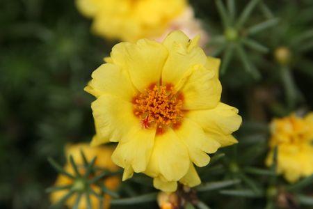 nectar: nectar flower
