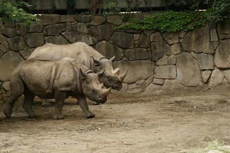 rhinocerous Stock Photo - 9561420