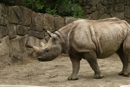 investigative: rhinocerous Stock Photo