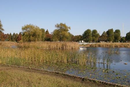 ouside: fall park