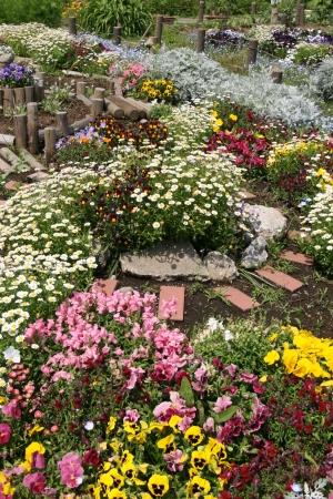 flower garden photo