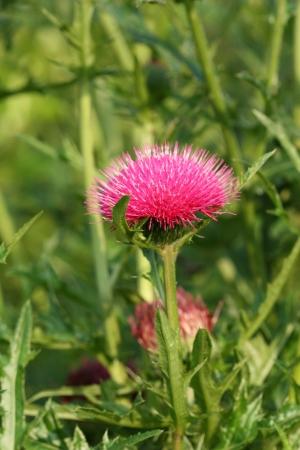 wild flower Stock Photo - 14005077