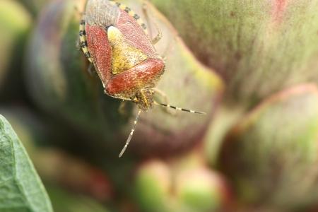 coitus: bugs