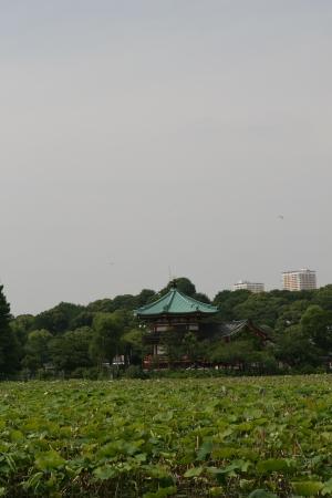 ueno park photo