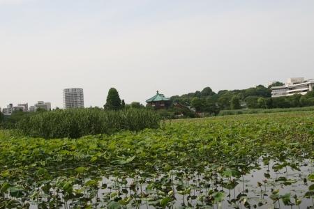 ueno park Stock Photo - 14119532