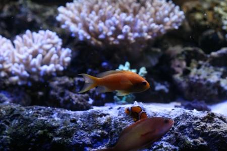 water world aquarium Stock Photo - 17312312