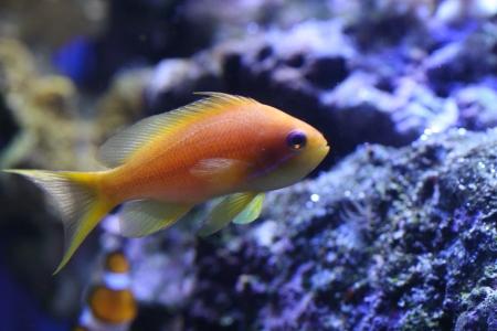 water world aquarium Stock Photo - 17312269