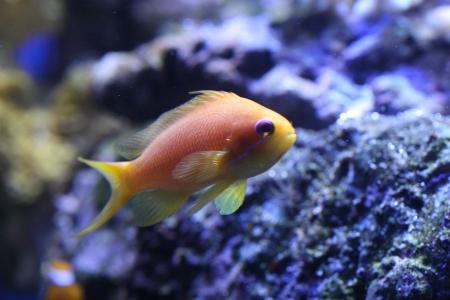 water world aquarium Stock Photo - 17312313