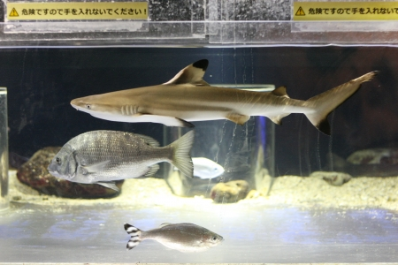 shark Stock Photo - 17475523