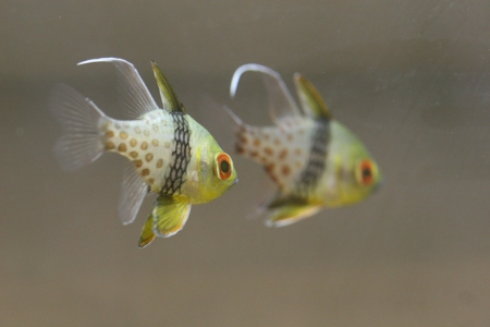 water world aquarium Stock Photo - 17490537