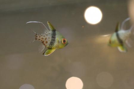 water world aquarium Stock Photo - 17490313