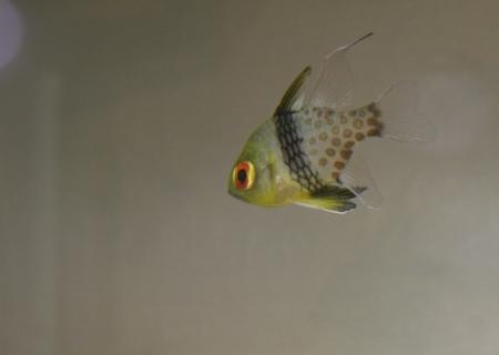 water world aquarium Stock Photo - 17486228