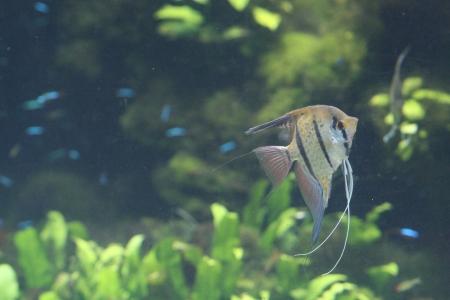 water world aquarium Stock Photo - 17490716