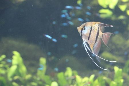 water world aquarium Stock Photo - 17490647