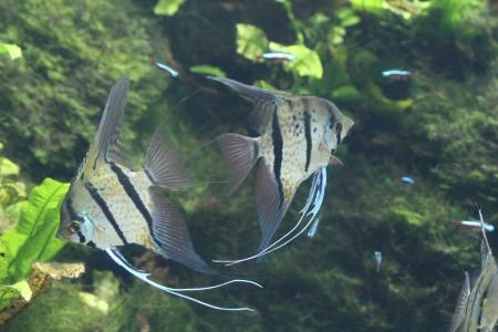 water world aquarium Stock Photo - 17491438