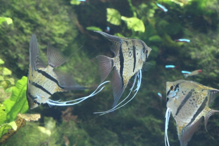 water world aquarium Stock Photo - 17491439