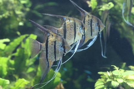 water world aquarium Stock Photo - 17490985