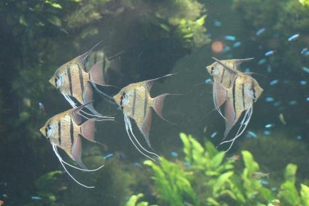 water world aquarium Stock Photo - 17491456