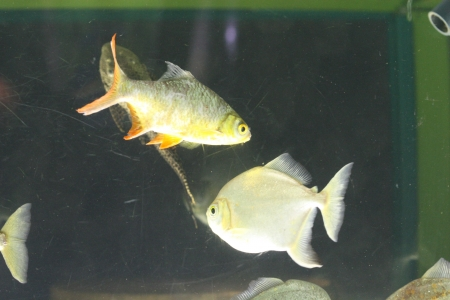 water world aquarium Stock Photo - 17490250