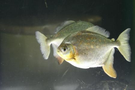 water world aquarium Stock Photo - 17490096
