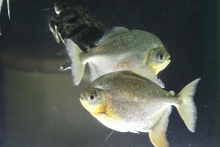 water world aquarium Stock Photo - 17490301