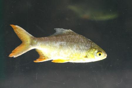 water world aquarium Stock Photo - 17489718