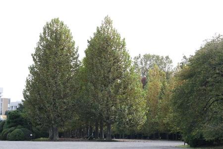 horizontals: garden Stock Photo