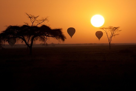 Hot Air Balloons flying over Serengeti Tanzania at sunrise. photo