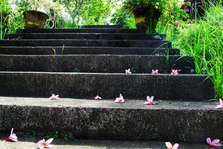 kamboja: Stairs in Bali flowers. Stock image. Stock Photo