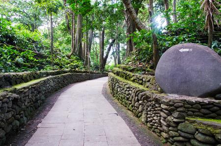 Walk of the forest monkeys, Bali, Ubud. National Park. Stock image.