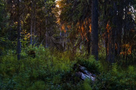 dense: dense forest