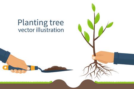 Piantagione di alberi, alberello con le radici e vanga da giardino in mano di uomo. Processo concetto di piantagione, infografica. Giardinaggio, l'agricoltura, la cura per l'ambiente. Illustrazione vettoriale design piatto. Giovane alberello. Vettoriali