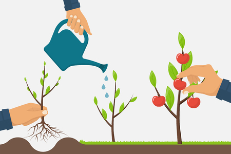 Process of growth of tree from planting to fruit ripening. Timeline infographic growth tree. Horticulture concept. Growth stage from sapling to apple. Vector illustration flat. Development cultivation Vettoriali