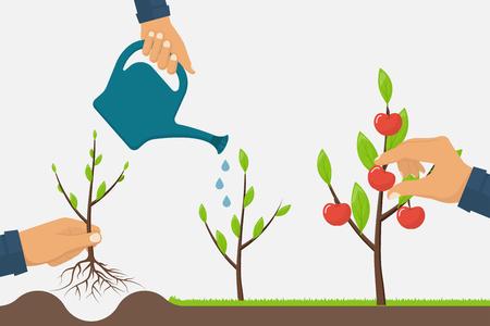 Processo di crescita di un albero da piantare a maturazione dei frutti. Timeline albero crescita infografica. concetto di Orticoltura. fase di crescita da alberello ad Apple. Illustrazione di vettore piatta. la coltivazione di sviluppo