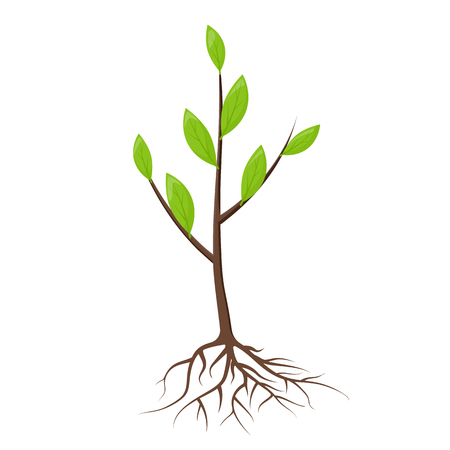 Tree with roots and leaves isolated. Young tree, sapling ready for planting. Planting of greenery concept. Gardening, agriculture. New plantings. Vector illustration on white background flat design.