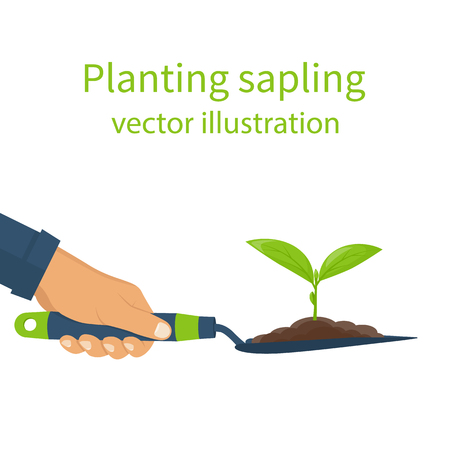 cultivated: Planting sapling, concept.  Garden shovel in hands man with soil and plant. Green sprout. Vector illustration flat design. Seedling agriculture. Cultivated ground. Growth and environmental recovery.