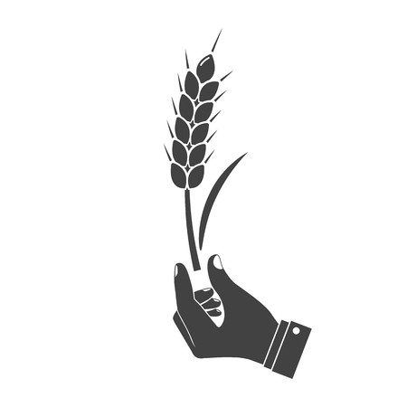 peasant: Man holding in hand wheat ear, black icon isolated on white background. Wheat spike holding farmer, peasant. Development agriculture, farming. Symbol of harvest. Vector illustration silhouette design.