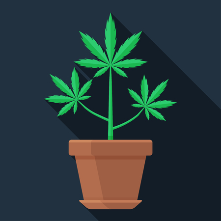 Marijuana plant in the pot flat vector icon. Colorful illustration of growing weed. Green cannabis leaves.