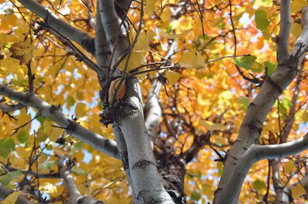 a beautiful tree with golden leaves in autumn