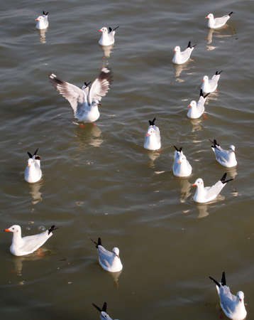 immigrate: Seagull Stock Photo