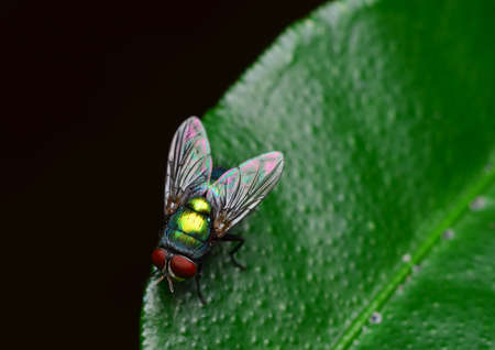 opalescent: macro shot of a fly
