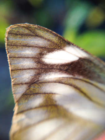 detail: Detail of butterfly wing