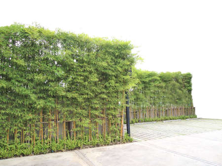 shurb: greenery wall of bamboo