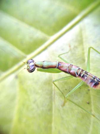 by shot: macro shot of grasshopper Stock Photo