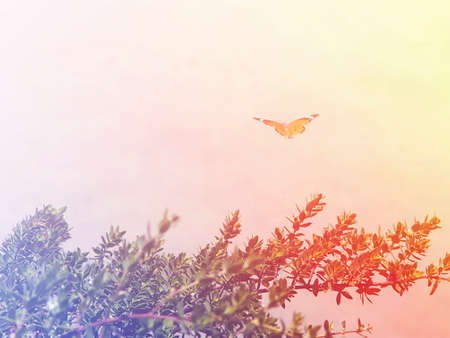 liberate: concept of gliding butterfly float in bright sky as new hope or freedom