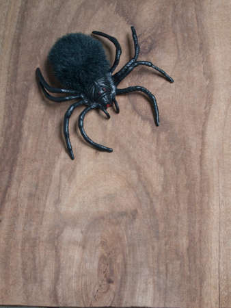 wood spider: spider on wood background for halloween concept Stock Photo