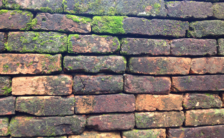 green moss cover on ancient brick wall