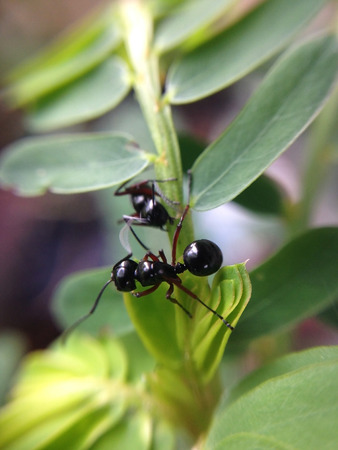 close up of worker ants on leaf with blur background Stock Photo