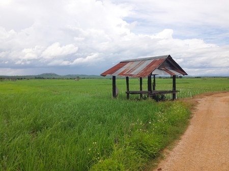 field of green rice or paddy with hut and mountain background